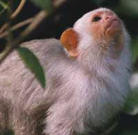 Marmoset monkey's are the subject of Wendy Saltzman's research into social status and fertility