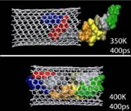 DNA inserted into a carbon nanotube