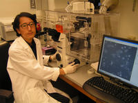 Noboru Sato is an assistant professor of biochemistry and a member of the Stem Cell Center at UC Riverside.  Photo credit: UCR Strategic Communications. (Additional images below.)