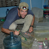 Biologist Ronald Bassar of UC Riverside works with guppies in the lab.  Photo credit: Sonya Auer, UC Riverside. (More photos below.)<br />