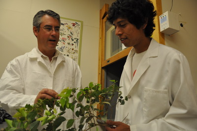 Louis Santiago (left) and Fortino Morales, an undergraduate student working in Santiago's lab, examine a plant.  Photo credit: UCR Strategic Communications.