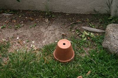 Photo shows a sugar water vial on the ground and covered with a flower pot.  Photo credit: Rust lab, UC Riverside.