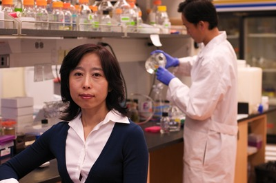 Xuemei Chen is a professor of plant cell and molecular biology at UC Riverside.  Photo credit: UCR Strategic Communications.