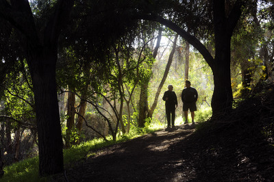 One of the trails in the UC Riverside Botanic Garden