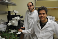Assaf Mosquna (left) is a postdoctoral researcher working with Sean Cutler, an associate professor of plant cell biology in the Department of Botany and Plant Sciences at UC Riverside.  Photo credit: UCR Strategic Communications.