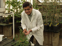 A. L. N. Rao of the department of plant pathology has been awarded a grant of $994,715 by the National Institutes of Health.  (Photo credit:  Stephen Wegulo. Click on image for a high-resolution photograph.)