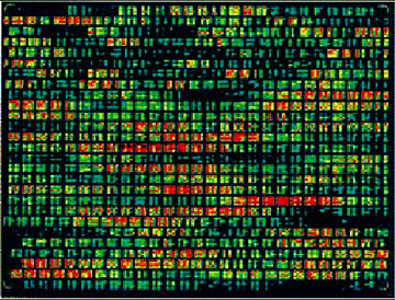 DNA chip array. <br />