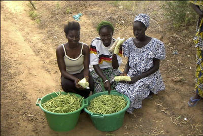 Roadside vendors of cowpea (shelled and whole pods), near Thies, Senegal. Photo credit: J. Ehlers, UCR.
