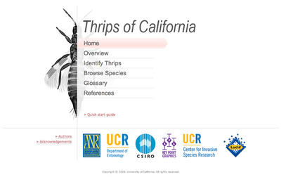 Thrips of California homepage on the CD-ROM.  Image credit: M. Hoddle, UC Riverside.