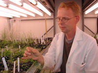 Paul Larsen, an associate professor of biochemistry at UC Riverside, examines an <i>Arabidopsis</i> plant. Photo credit: UCR Strategic Communications.