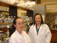 Xin Cai (left) is a postdoctoral researcher working in Xuan Liu's lab at UC Riverside.  Liu (right) is a professor of biochemistry.  Photo credit: UCR Strategic Communications.
