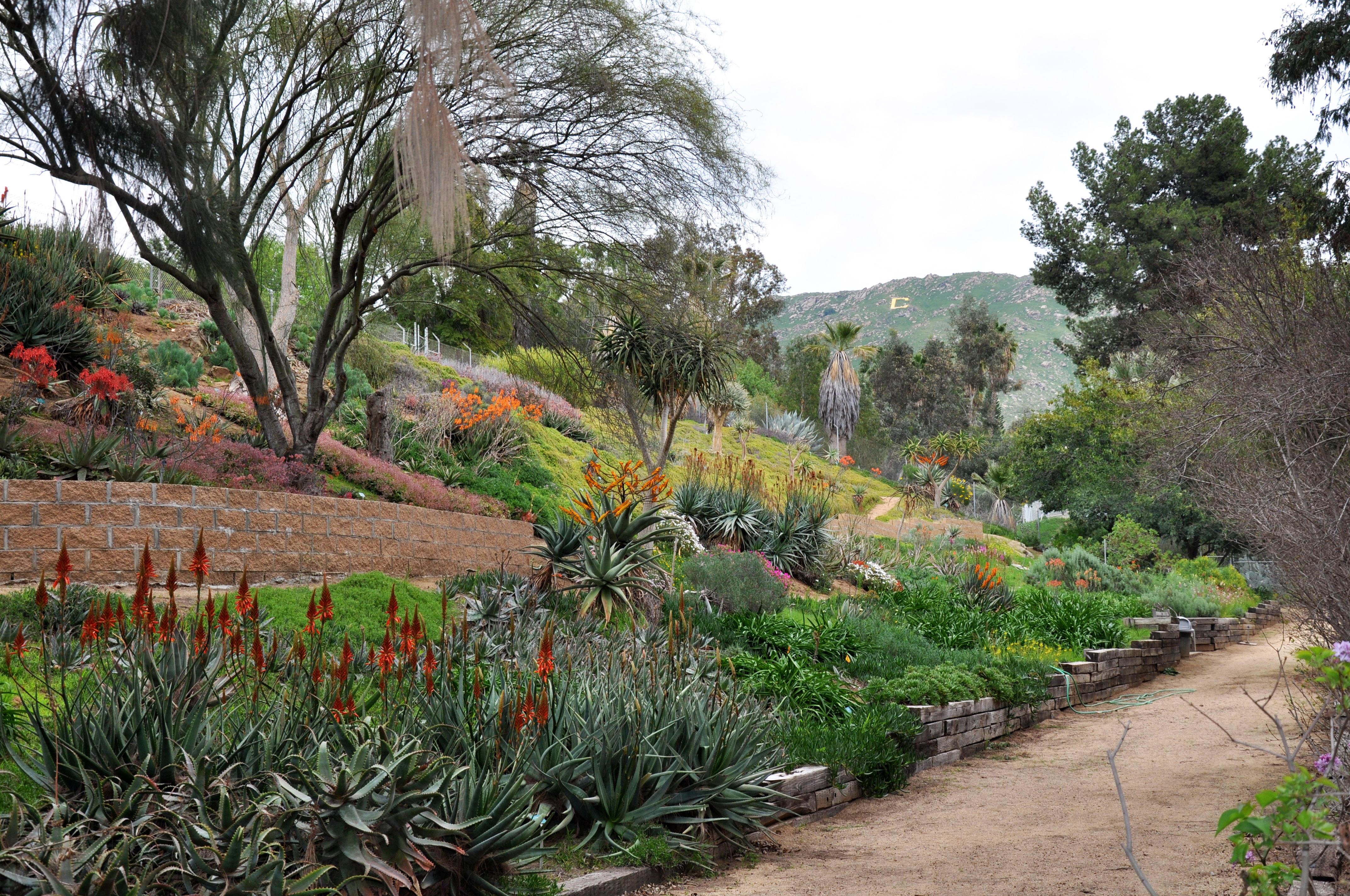 Ucr Newsroom Primavera In The Gardens
