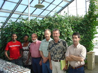 (L to R) UC Riverside cowpea researchers Wellington Muchero, Ndeye Diop, Raymond Fenton, Jeff Ehlers, Philip Roberts and Timothy Close in a greenhouse on the UCR campus.  Cowpea plants stand behind them.  Photo credit: UCR Strategic Communications.