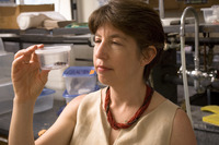 Marlene Zuk, a professor of biology at UC Riverside, observes a cricket in the lab. Photo credit: Walter Urie.