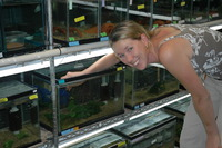 Sonya Auer, a graduate student in UCR's Department of Biology, researches guppies in the lab.  Photo credit: Ronald Bassar.  (Another photo below.)