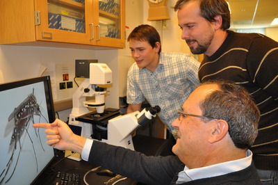 Warren MacDonald (left), Bart Bryant and Alexander Raikhel (seated) take a look at an image of a female <i>Aedes aegypti</i> mosquito whose gut has undigested blood.  The researchers developed a method that deactivates a key microRNA in the mosquito; this microRNA is responsible for blood digestion and egg development.  Photo credit: UCR Strategic Communications.