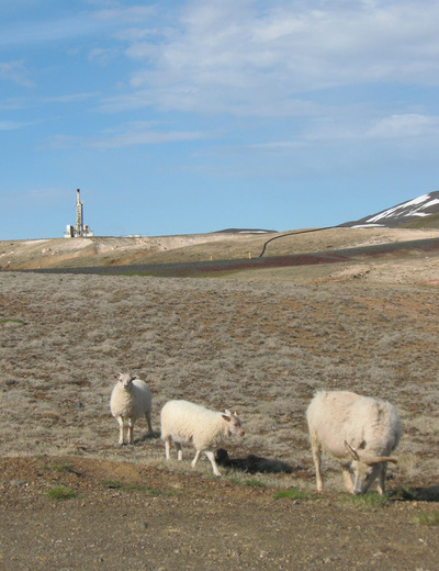 Sheep graze near the Iceland Drilling Company rig at the Krafla geothermal field, in northern Iceland, that drilled into 900°C rhyolite magma at 2140 meters depth in June 2009. Photo credit: W. Elders, UC Riverside.