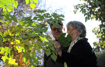 Visitors admire the shape of the leaves