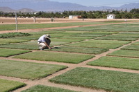 UCR's Turfgrass Research Facility.  Photo credit: K. Nagy, UCR Strategic Communications.